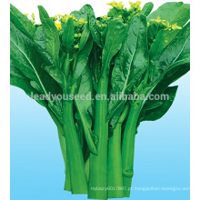 CS03 Dazhong 70 dias frio verde resistente choy sum sementes para semear