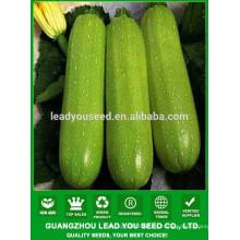 Semillas de calabacín híbridas NSQ101 Haoa calidad verde, semillas de hortalizas