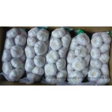 2016 neue Ernte frischer weißer Knoblauch