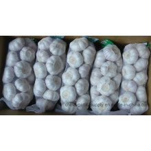 2016 New Crop Fresh White Garlic