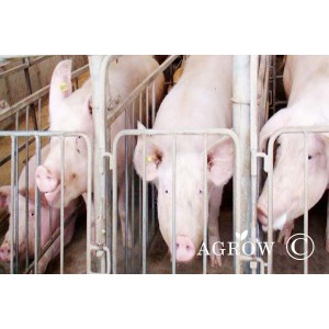 Farm Pig Stalls for sow gestation Crates