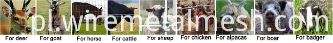 Galvanized Sheep Fence picture