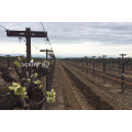 orchard galvanized vineyard post UNOVO made