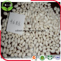 Canned Grade White Kidney Beans