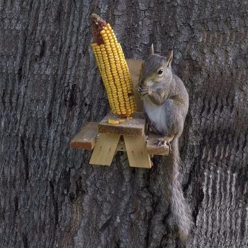 Alimentador de esquilos de novidades engraçadas para presente, GIBBON / ET-720729, alimentador de esquilos de madeira fácil de limpar, preencher e instalar
