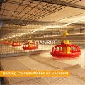 Equipamento para avicultura H quadro de frangos de corte