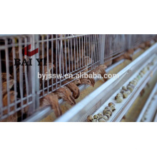 Высокое качество металлической клетке перепелов птицы для продажи