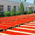 China hochwertige Goji-Beere Pulver Direktverkauf der Fabrik und guter Preis