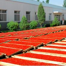 Chine vente directe d'usine de poudre de baie de goji de haute qualité et bon prix
