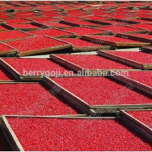 Chinese goji berries/lycium berry/Sun Dried