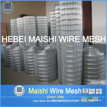 Good Quality Galvanized Welded Wire Mesh for Fencing