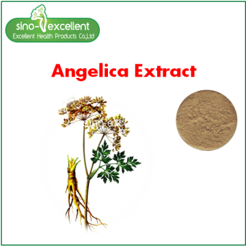 Angelica Root Extract Poeder