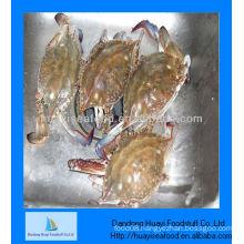 Blue swimming live crab wholesaler crab