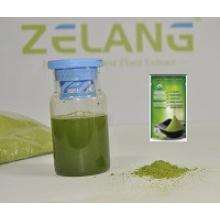 Proveedor del fabricante Get Matcha Green Tea Powder Matcha Instante