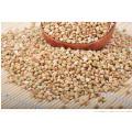 2017 nuevos granos / granos de alforfón de la cosecha, fabricante