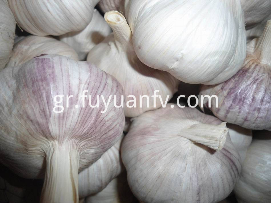 Normal White Garlic 30