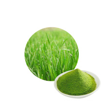 wholesale pure natural wheat grass jiuce extract
