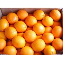 Naranja del ombligo de la calidad del hight