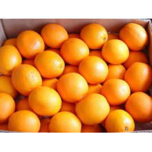 hight quality navel orange