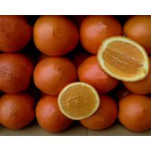 Navel Orange Supplier