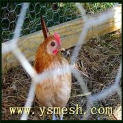 Malla de alambre de pollo galvanizado / PVC