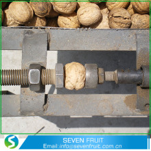 Walnuts Whole With Shell