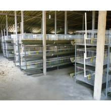 Système de cage de couche de poulet / cage à poulet