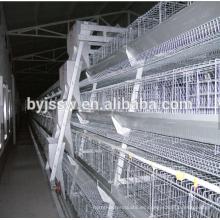 Etiopía Layer Chicken Farm Equipo de Avicultura en venta