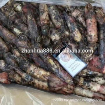 frozen seafood high quality black squid hainan loligo for bait Chinese supplier