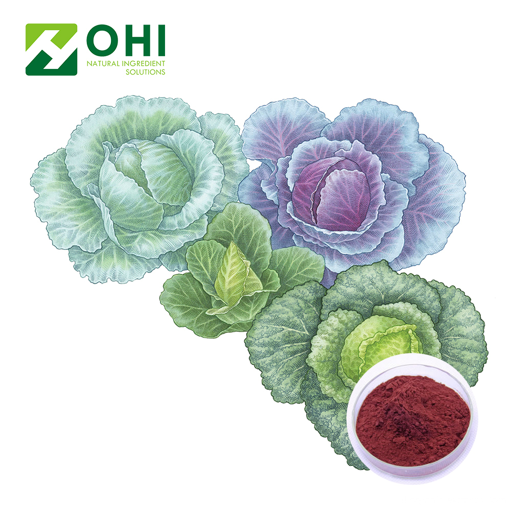 Red Cabbage Color Natural Powder Pigment