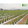 Greenhouse indoor agricultural film biodegradation