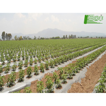 Good quality plastic mulch/Greenhouse packaging mulch jumbo rolling biodegradation