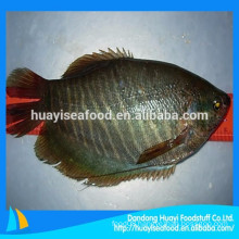Chinese seafood supplier export frozen flounder fish with competitive price