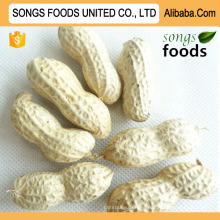 Peanut Seaflower Inshell New Crop From Shandong China