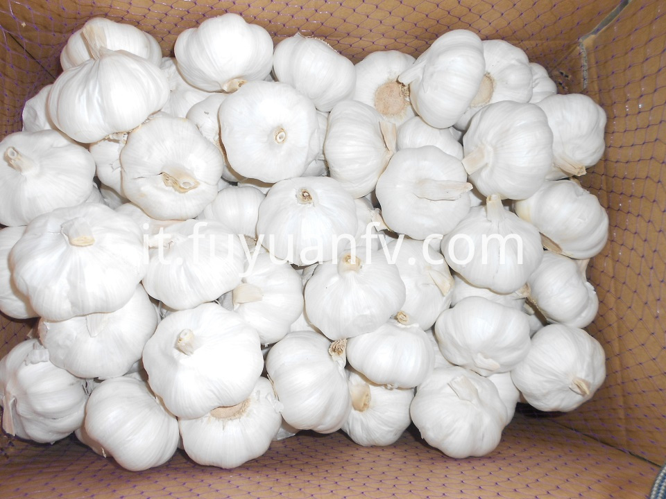pure white garlic 6.0cm 2
