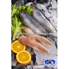 Gefrorener Fisch Hering Filet Meeresfrüchte