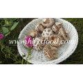 Légumes déshydratés (champignon de fleurs blanches)