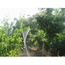 Top Quality Super Cheap Anti-bird Plastic Net