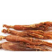 tranches de ginseng rouge coréen miellées
