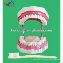Dental care model 28 teeth dental manikin