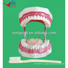 Модель стоматологической помощи 28 зубов стоматологический манекен