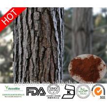 Alta Qualidade 100% Natural Certificated Orgânico Pine Bark Extrato Em Pó