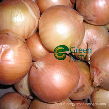 High Quality Fresh Whole Yellow Onion