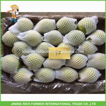 Pera de Shandong fresca de qualidade superior
