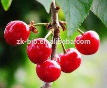 100% Natural Acerola Extract