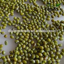 2013 Chinese Bulk Fresh Green Mung Bean For Sale