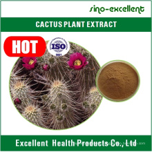 Cactus Extract Used for Cure Heart Palpitations Insomnia