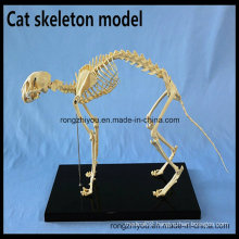 Cat Skeleton Model for Teaching and Medical Purpose Animal Anatomical Model