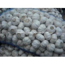 Neuer Ernte-frischer Knoblauch für den Export