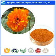 GMP approvisionnement d'usine Natrual Marigold Flower Extract poudre lutéine
